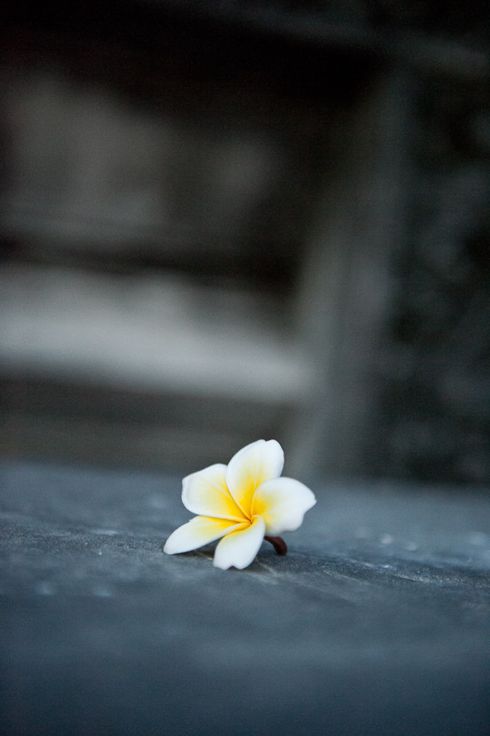 Zen Temple Flower